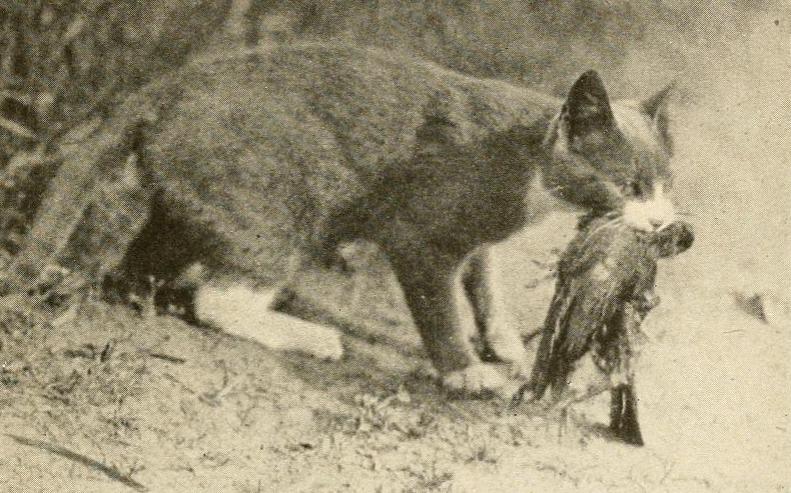 Barn cat with bird