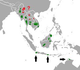 بانتنغ من ثدييات آسيا Bos_javanicus