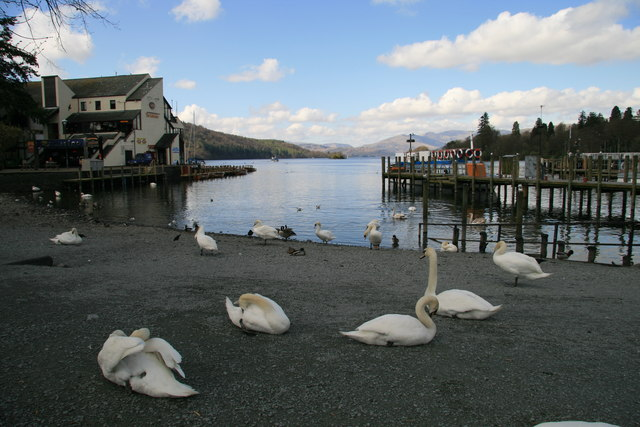 Bowness Swans - geograph.org.uk - 785162