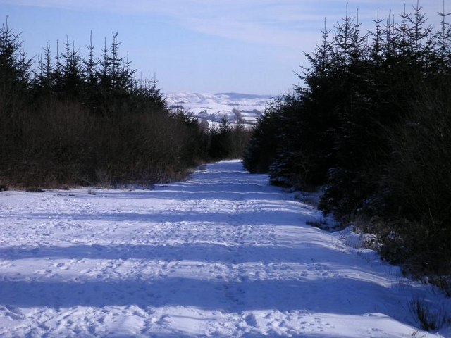 Brechfa Forest - geograph.org.uk - 304959