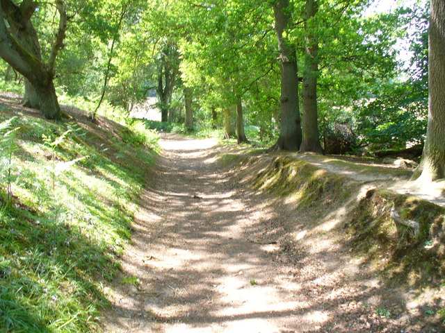 Bridleway in Abinger Roughs - geograph.org.uk - 818904