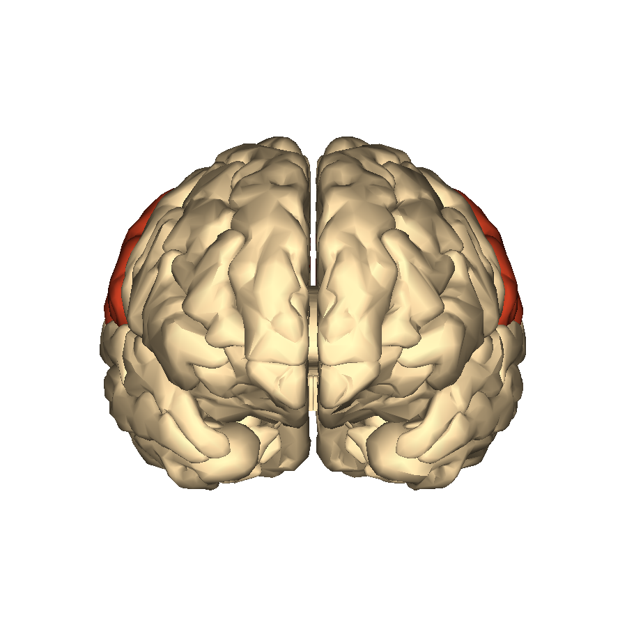 File:Cerebrum - parietal lobe - anterior view.png - Wikimedia Commons