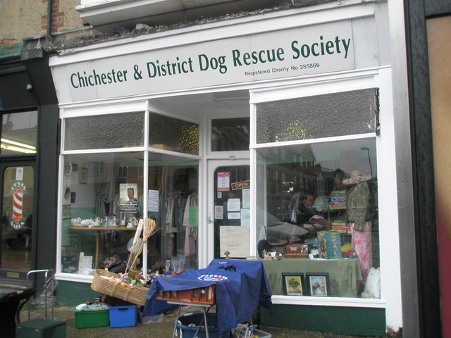 Dog Rescue Charity Roumania