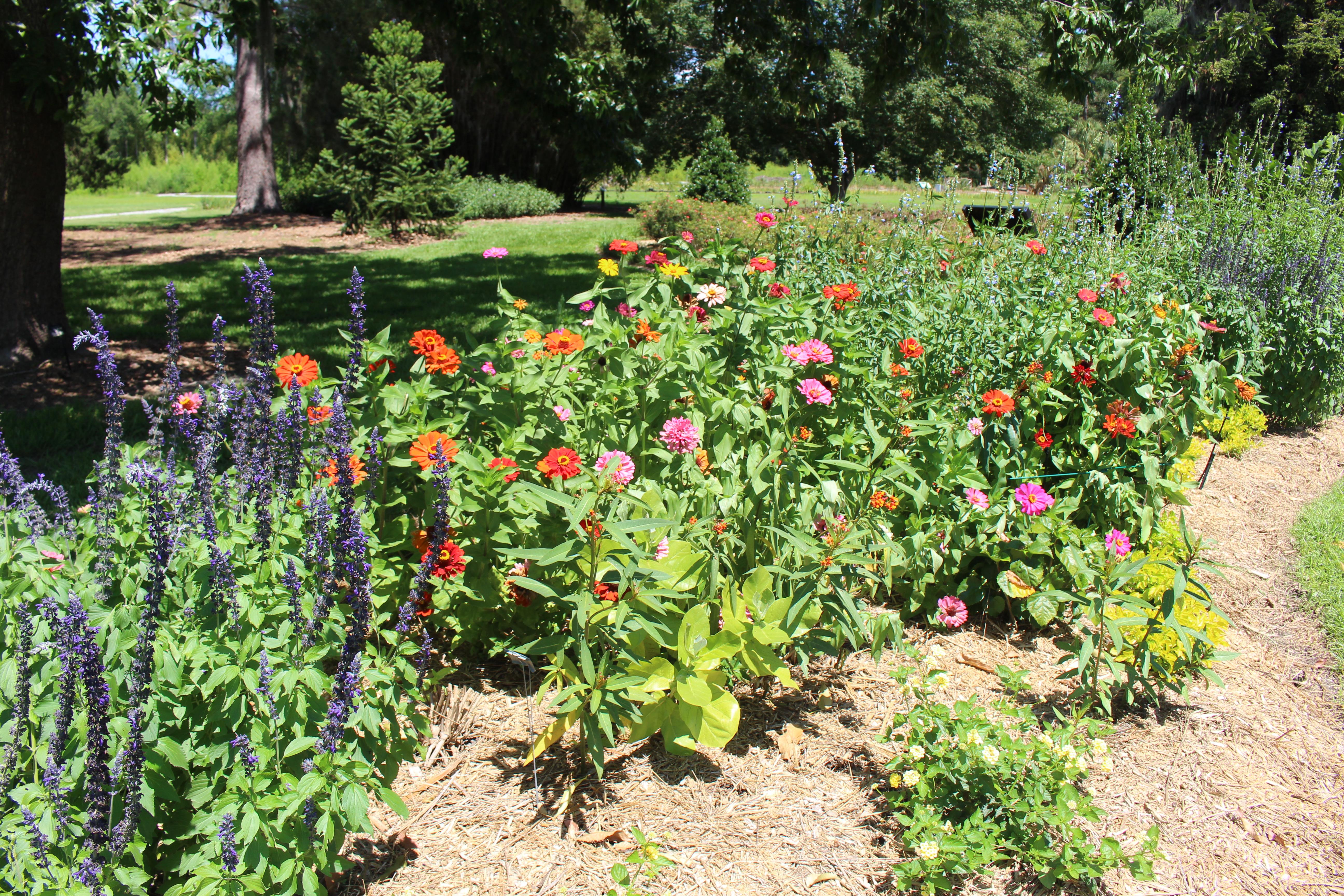 File:Coastal Georgia Botanical Gardens, 4