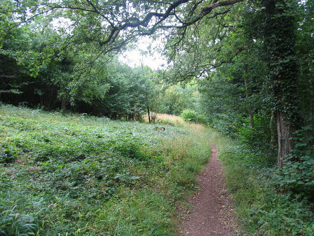 Cotswold Way, Lineover Woods - geograph.org.uk - 43912