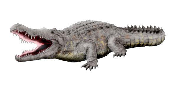 File:Crocodylus anthropophagus NT.jpg