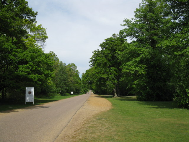 Drive into Windsor Great Park - geograph.org.uk - 1301522