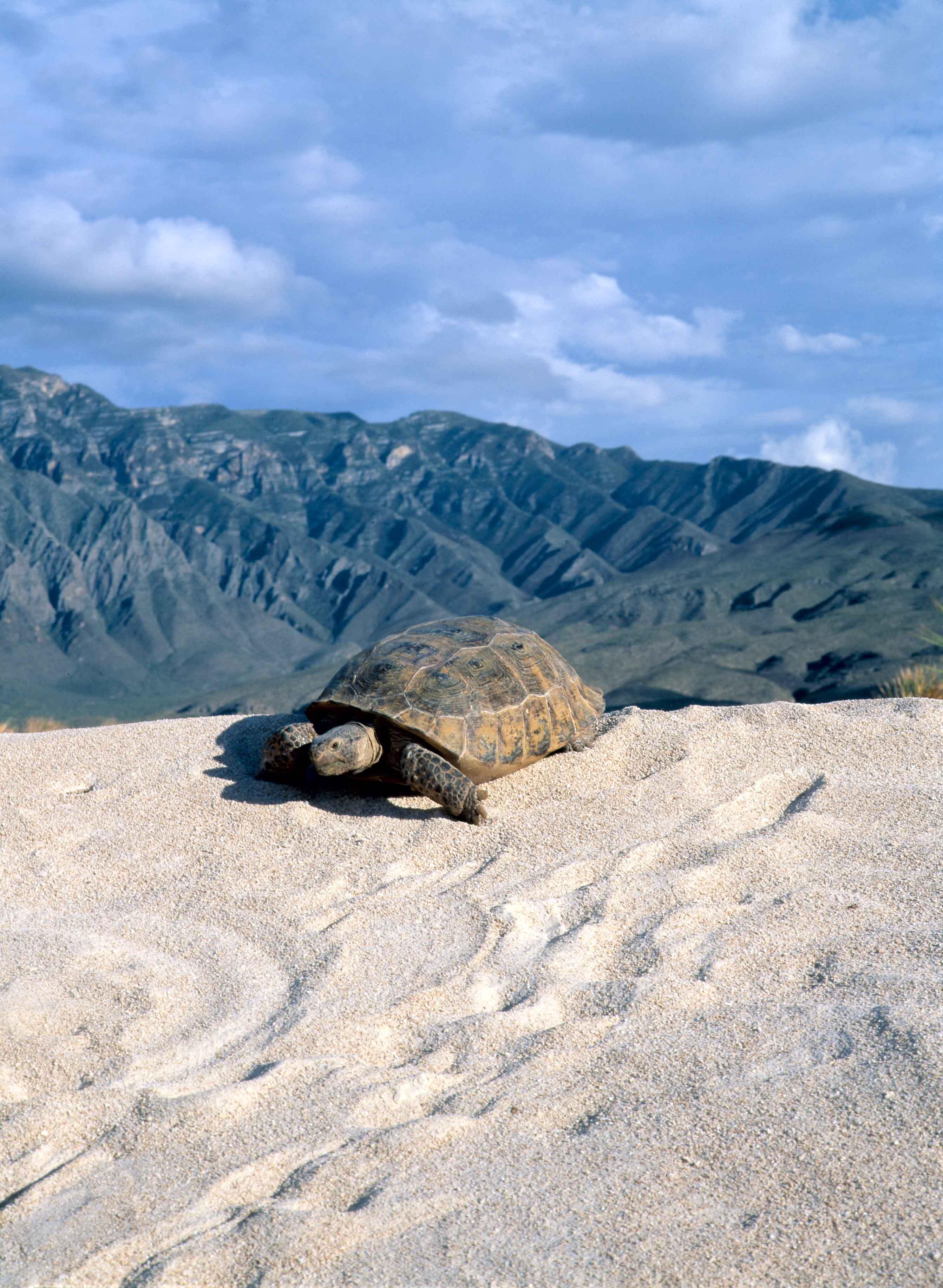 File:Dunas de Yeso, Cuatrociénegas, Coahuila (22757888709).jpg - Wikimedia Commons
