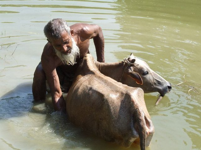 """Résultat de recherche d'images pour """"les animaux à la mousson au bangladesh"""""""