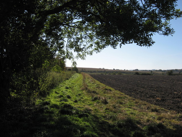 Field edge boundary hedge - geograph.org.uk - 1001684