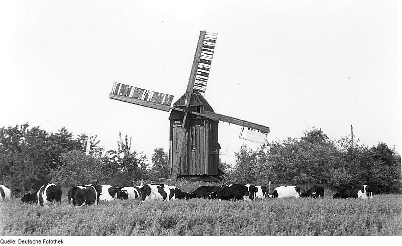 Fotothek df rp-a 0210029 Huy-Dingelstedt am Huy. Bockmühle, um 1897 erbaut