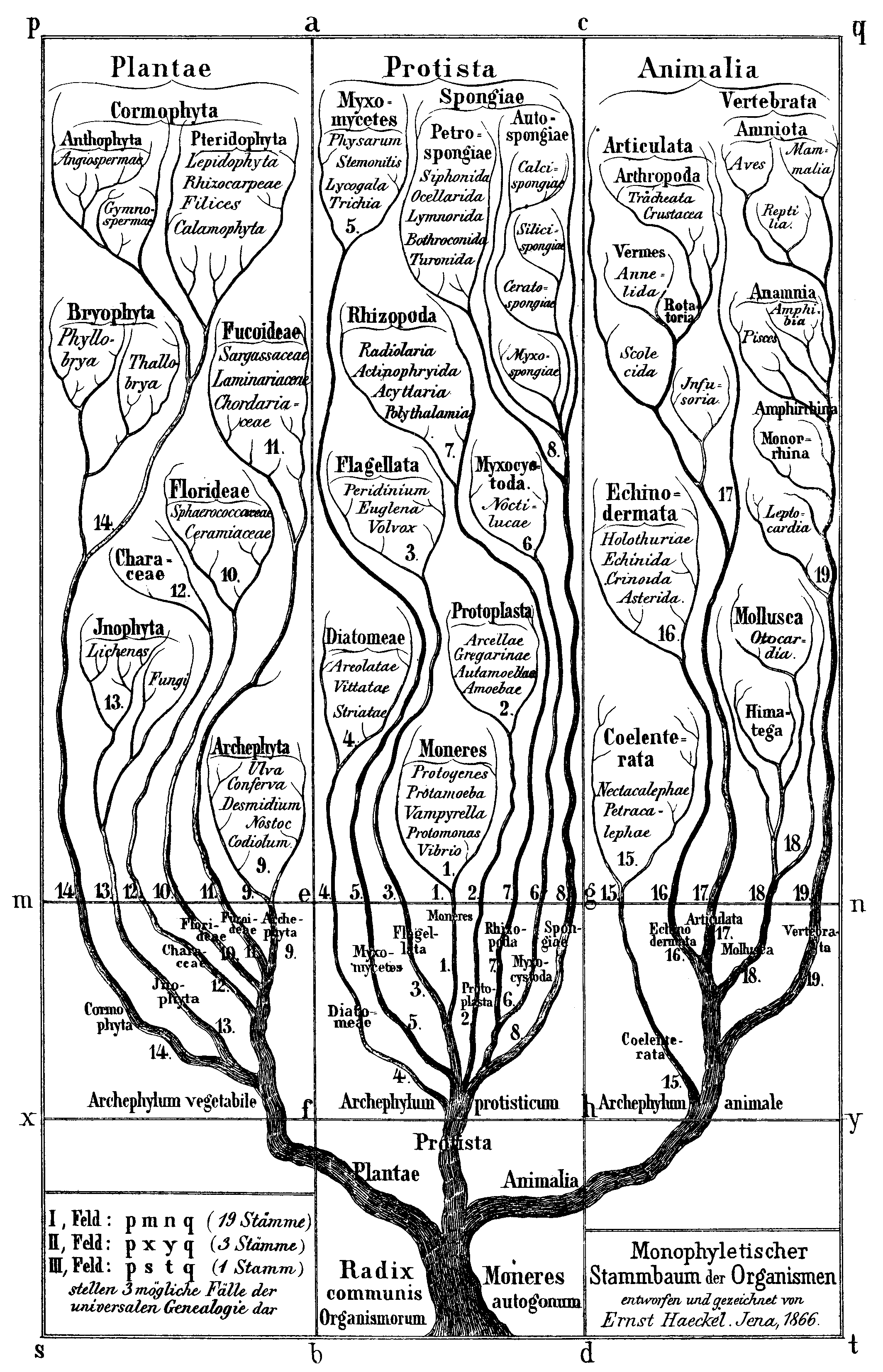 GEOL 102 Phylogeny, the Tree of Life