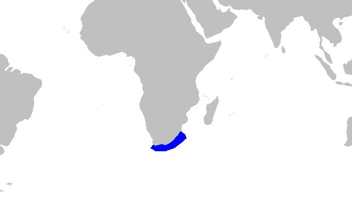 tawny nurse shark - Wikidata