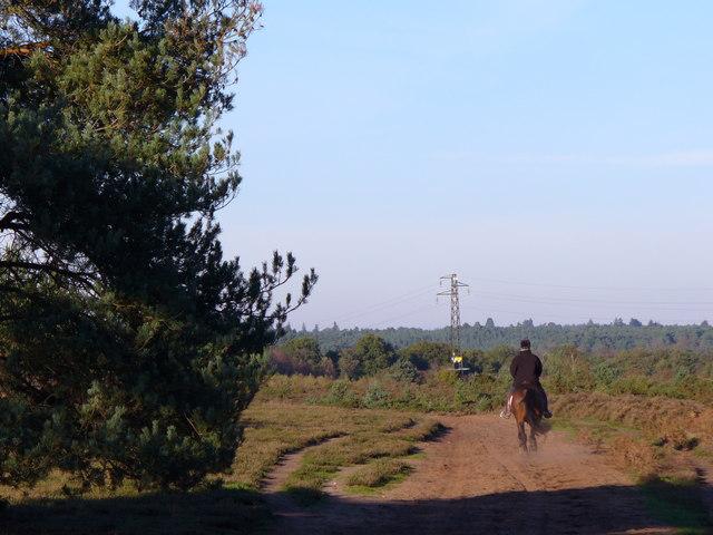 Horserider on Hankley Common - geograph.org.uk - 272564