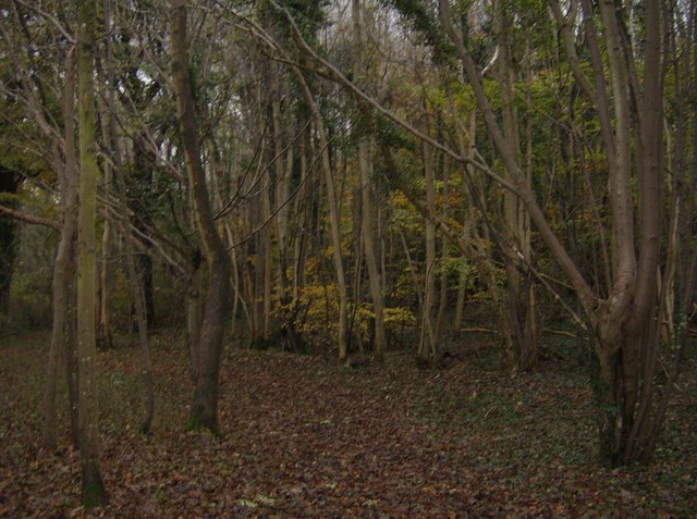 File:In Came Wood - geograph.org.uk - 621333.jpg