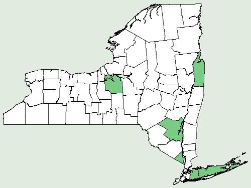 Isotria medeoloidesrange mapUSA - NY