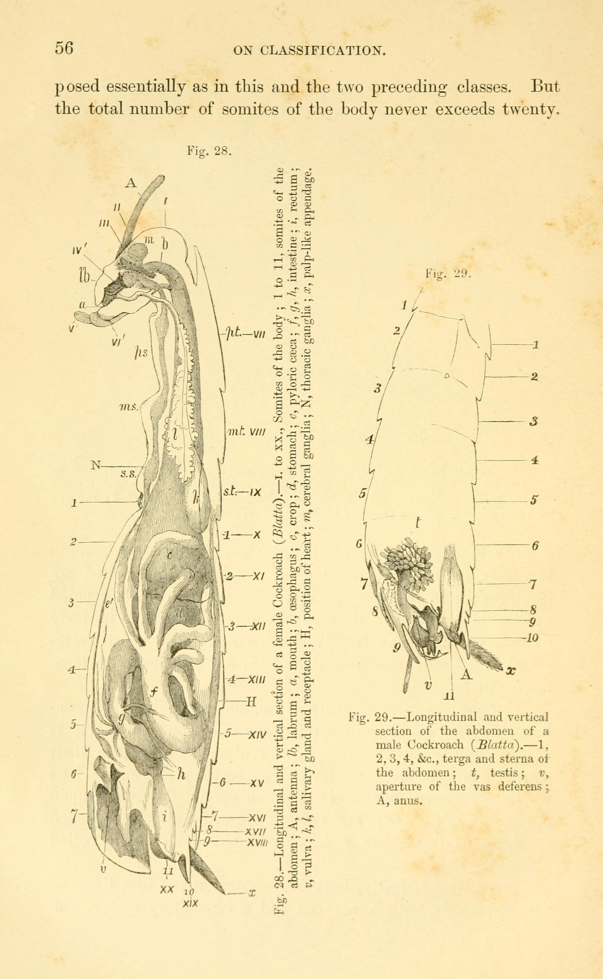 File:Lectures on the elements of comparative anatomy (Page 56 ...