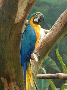 http://upload.wikimedia.org/wikipedia/commons/b/bc/Macaw-jpatokal.jpg