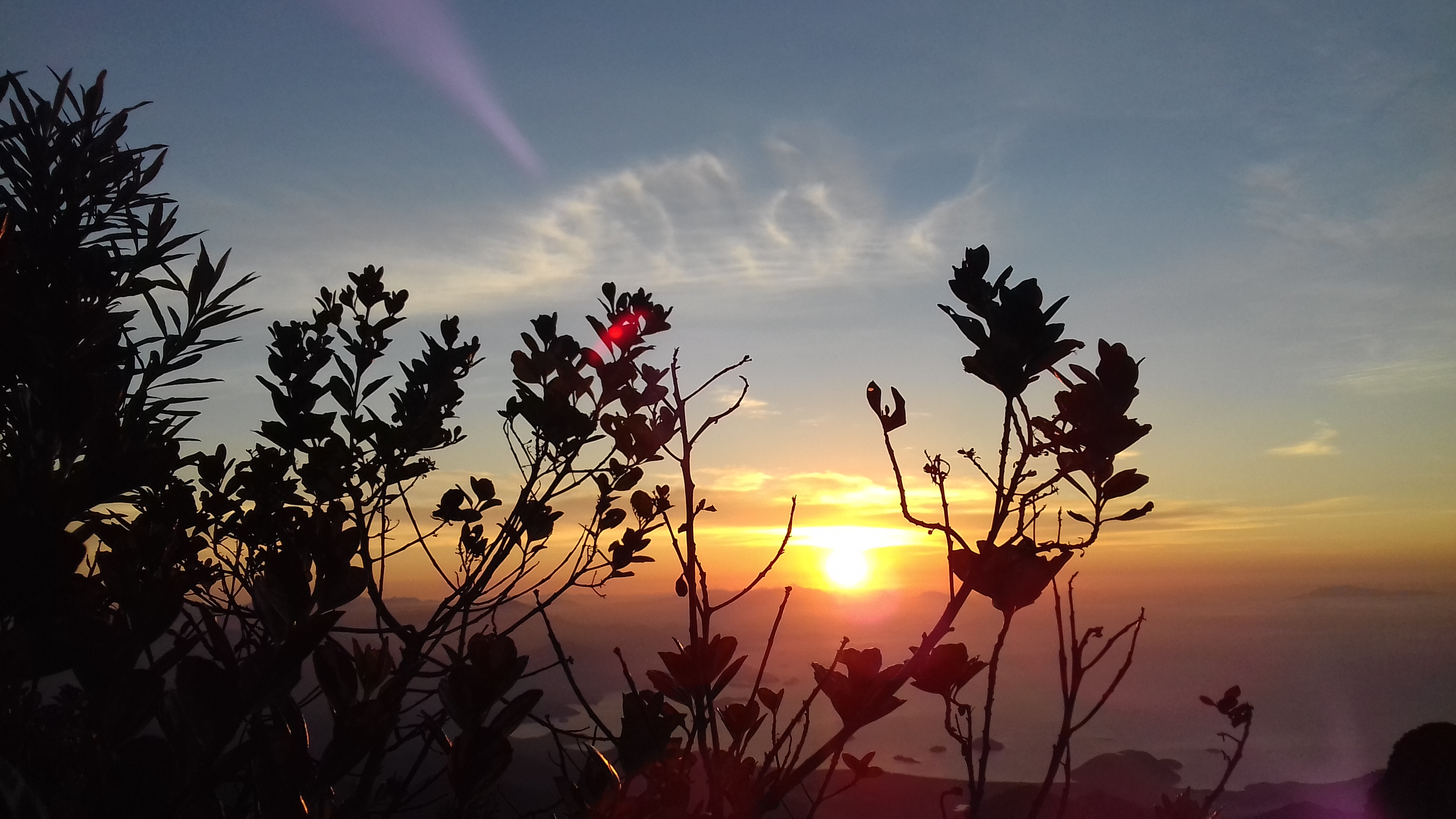 File:Nascer do Sol entre plantas silvestres.jpg - Wikimedia Commons