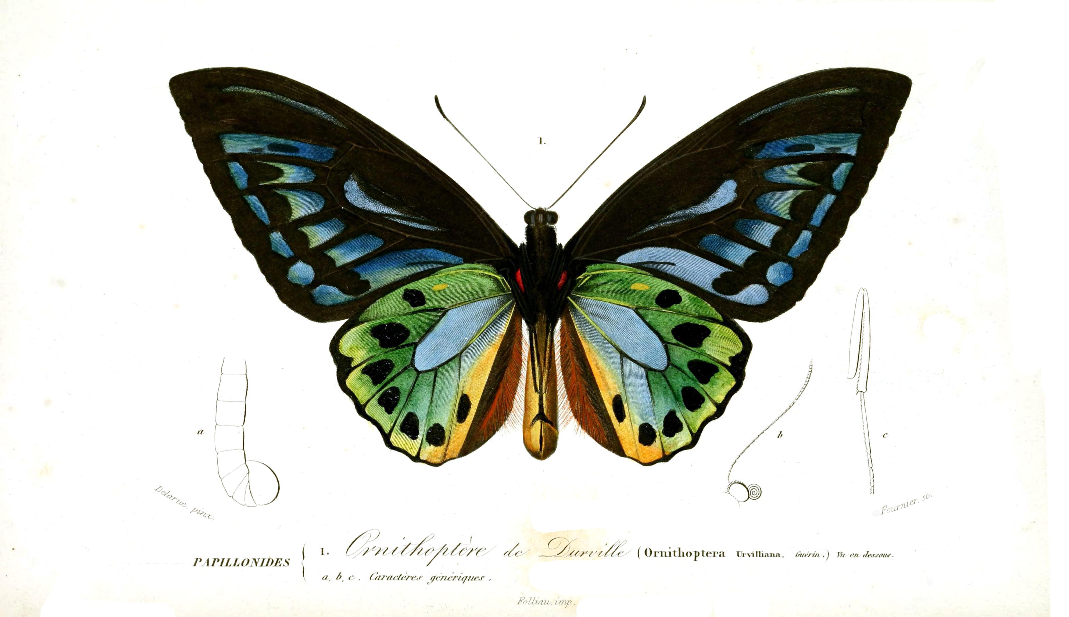 Nouveau dictionnaire d'histoire naturelle. T. 6