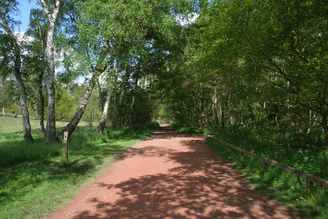 Path in Sherwood Forest Country Park - geograph.org.uk - 1330930