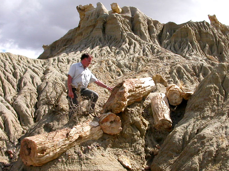 how to clean petrified wood