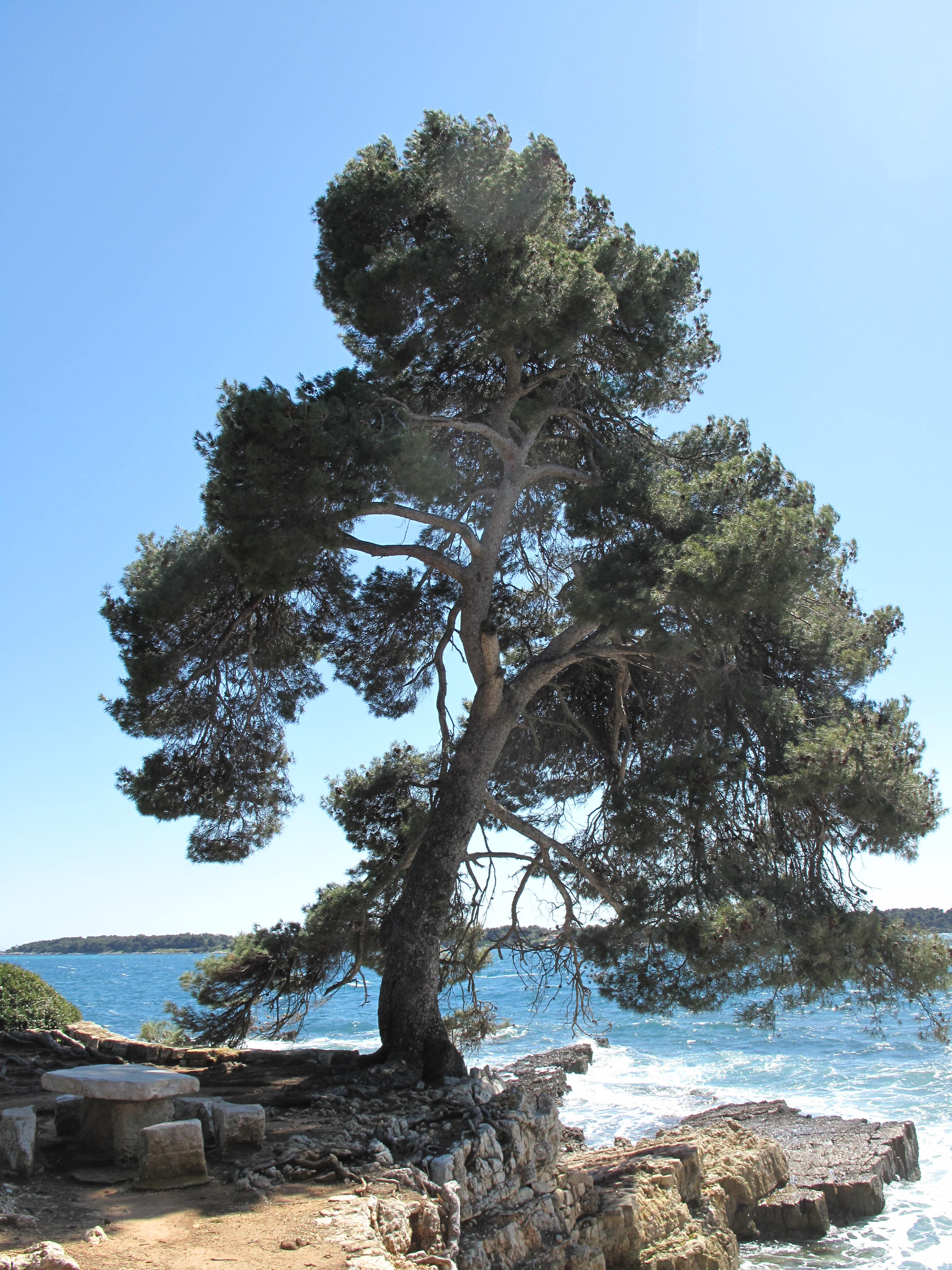 Tree Island Bc