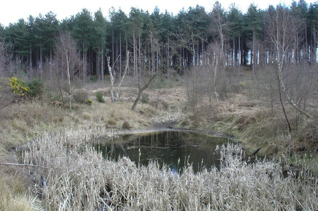 Pond - Tunstall Forest - geograph.org.uk - 260949