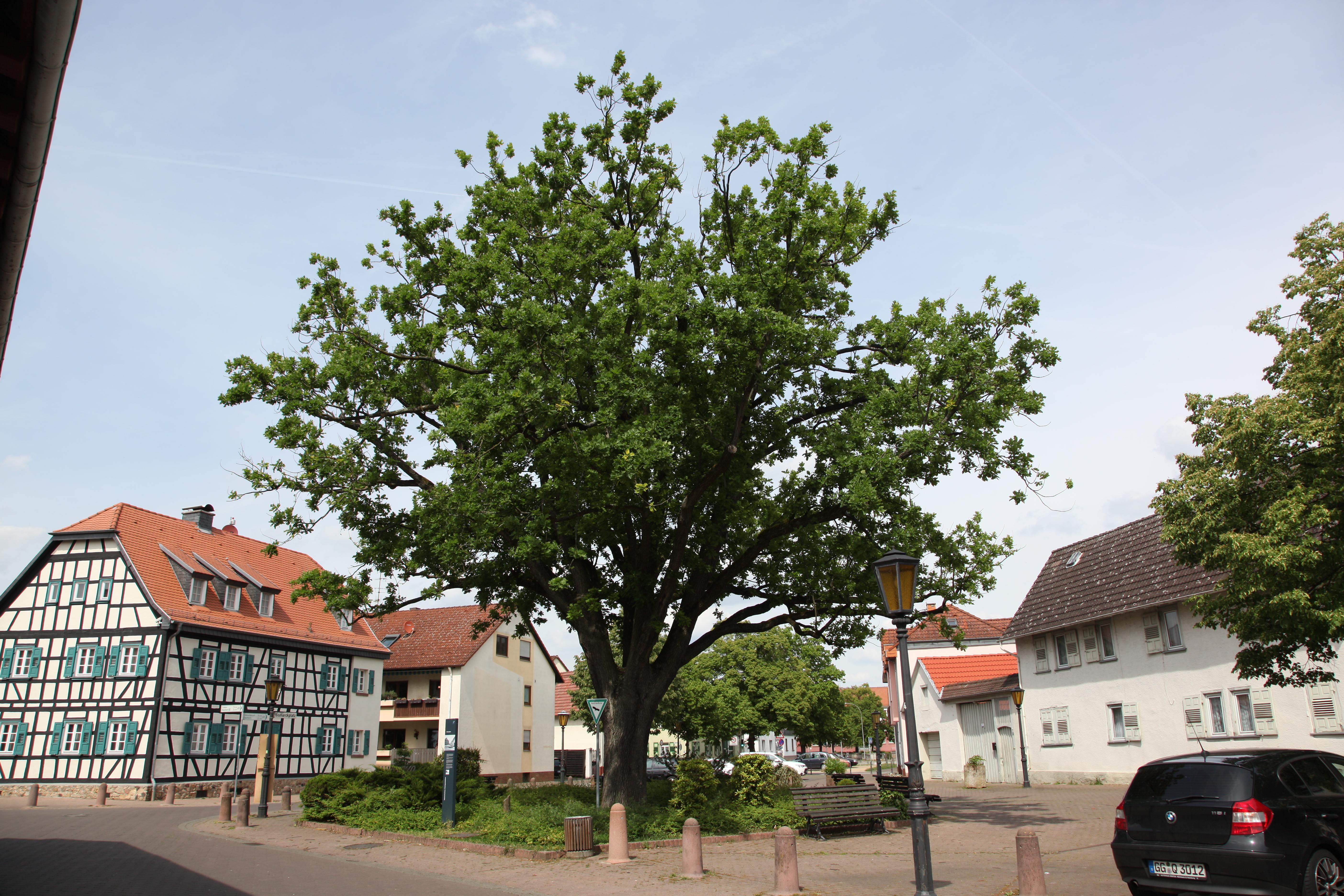 lovoo Rüsselsheim am Main