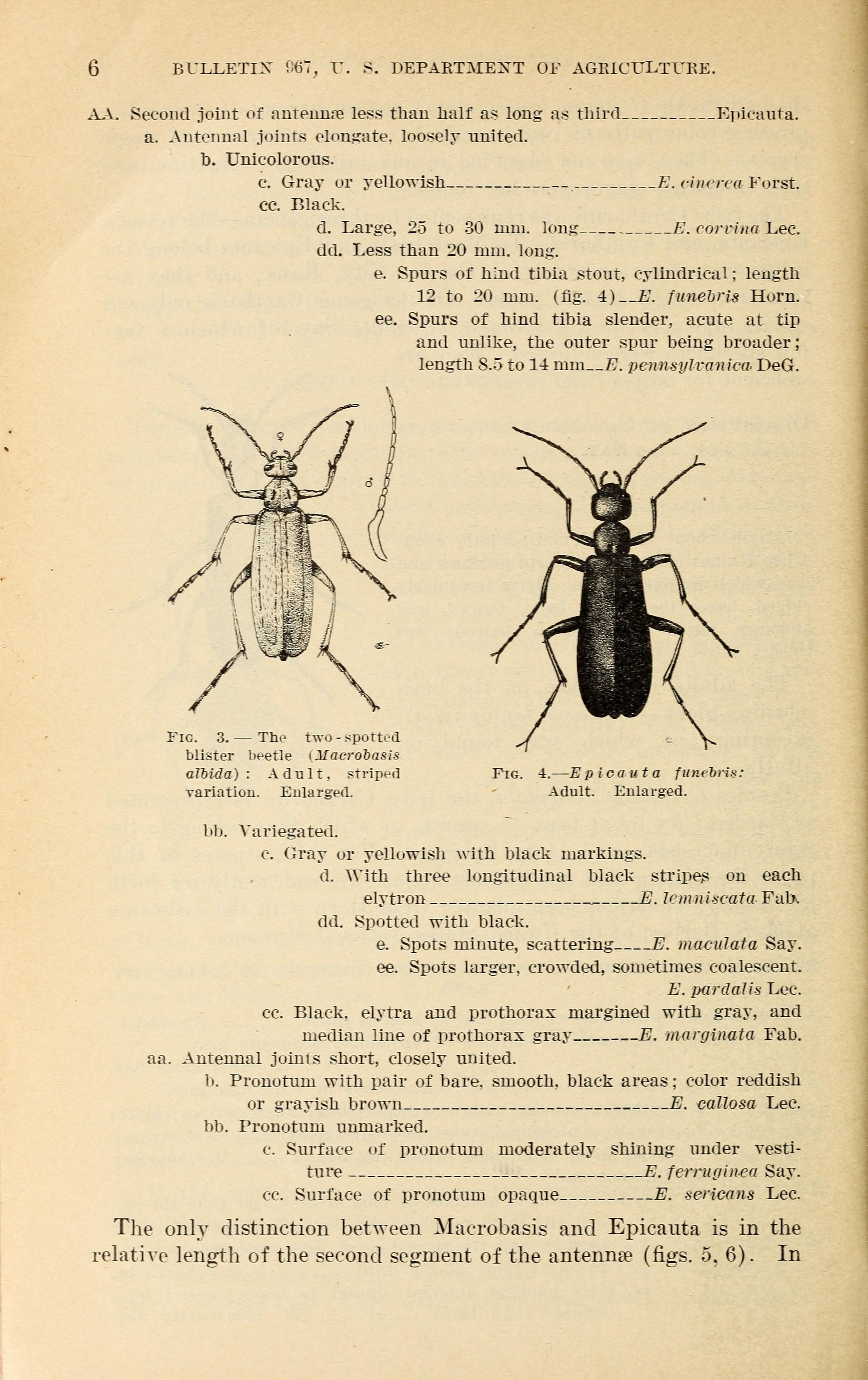 File:Results of work on blister beetles in Kansas (Page 6
