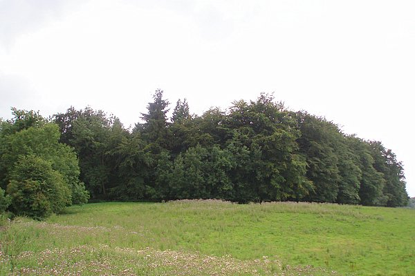 Round Hill Clump - geograph.org.uk - 212979