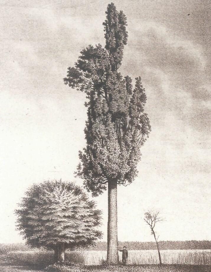 Schöne Zeichnungen file schöne eiche bei harreshausen jpg wikimedia commons
