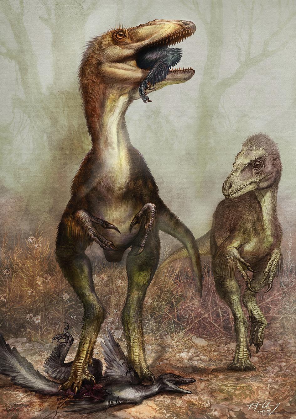 http://upload.wikimedia.org/wikipedia/commons/b/bc/Sinocalliopteryx_gigas_feeding_on_the_dromaeosaur_Sinornithosaurus_-_journal.pone.0044012.g008.png