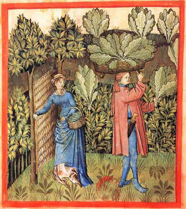 A woven wattle gate keeps animals out of the 15th century cabbage patch (Tacuinum Sanitatis, Rouen) Tacuinum Sanitatis-cabbage harvest.jpg