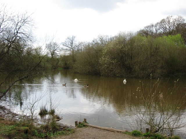 The Western Pond, Bookham Common - geograph.org.uk - 1237608
