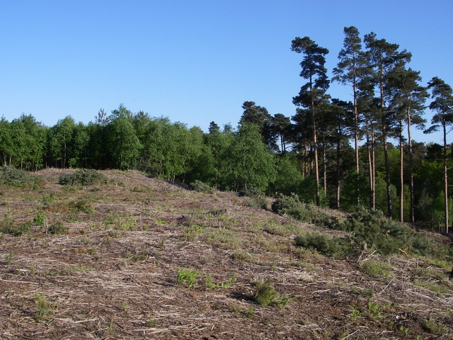 Tumulus in Tunstall Forest - geograph.org.uk - 420871