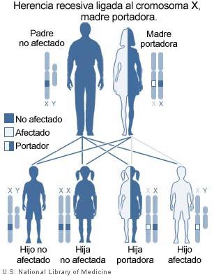 herencia humana: