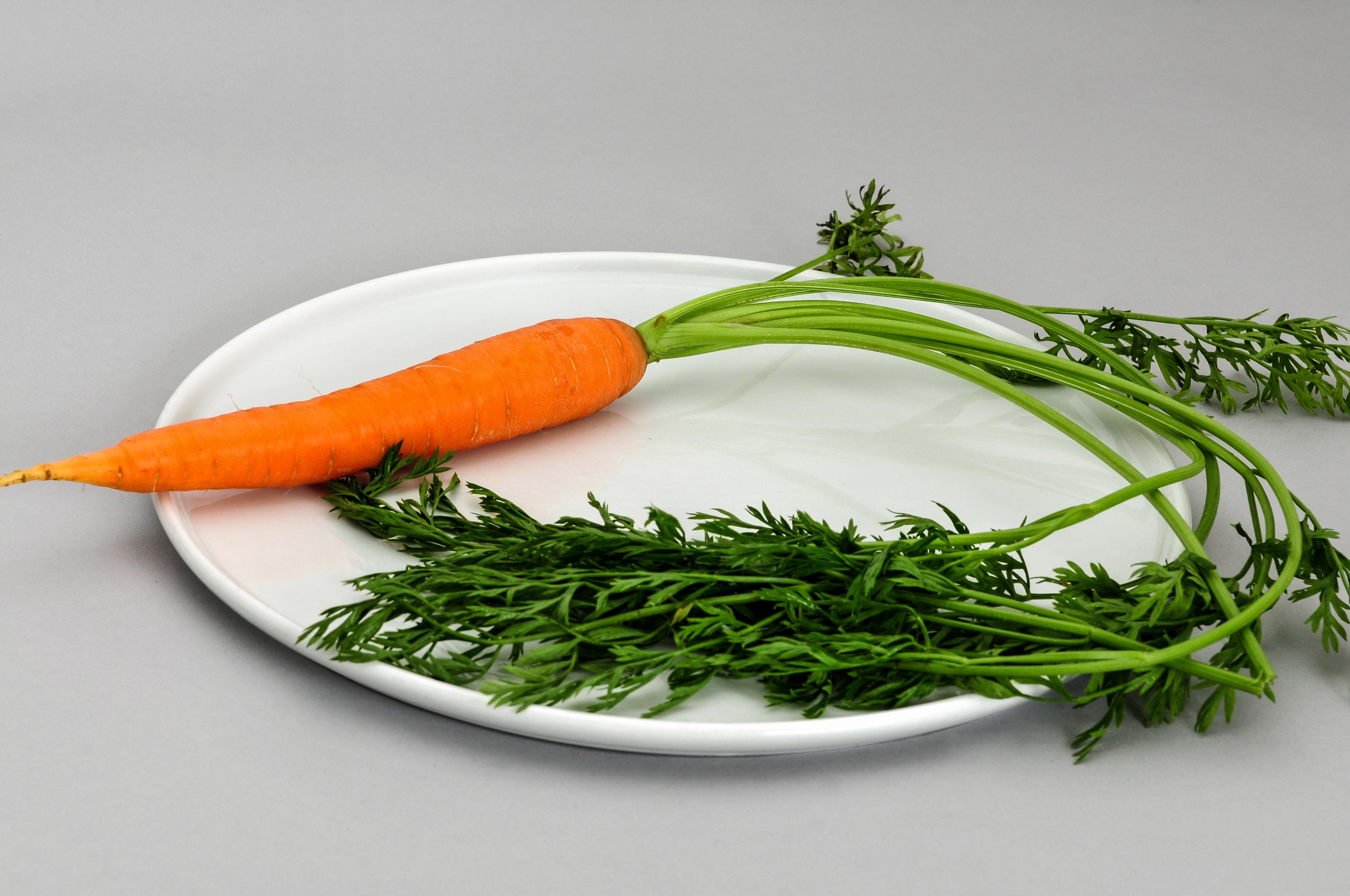 Principle the pdf carrot