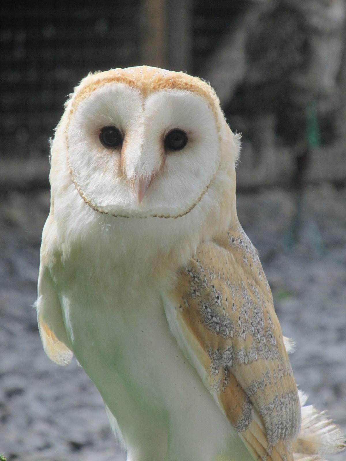 20120802 Zoo Zonnegloed (83)