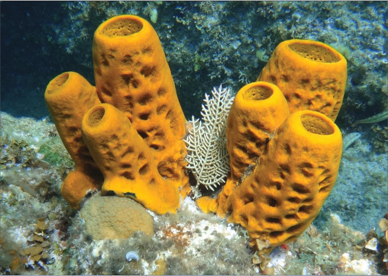 History Of Sponge Cakes