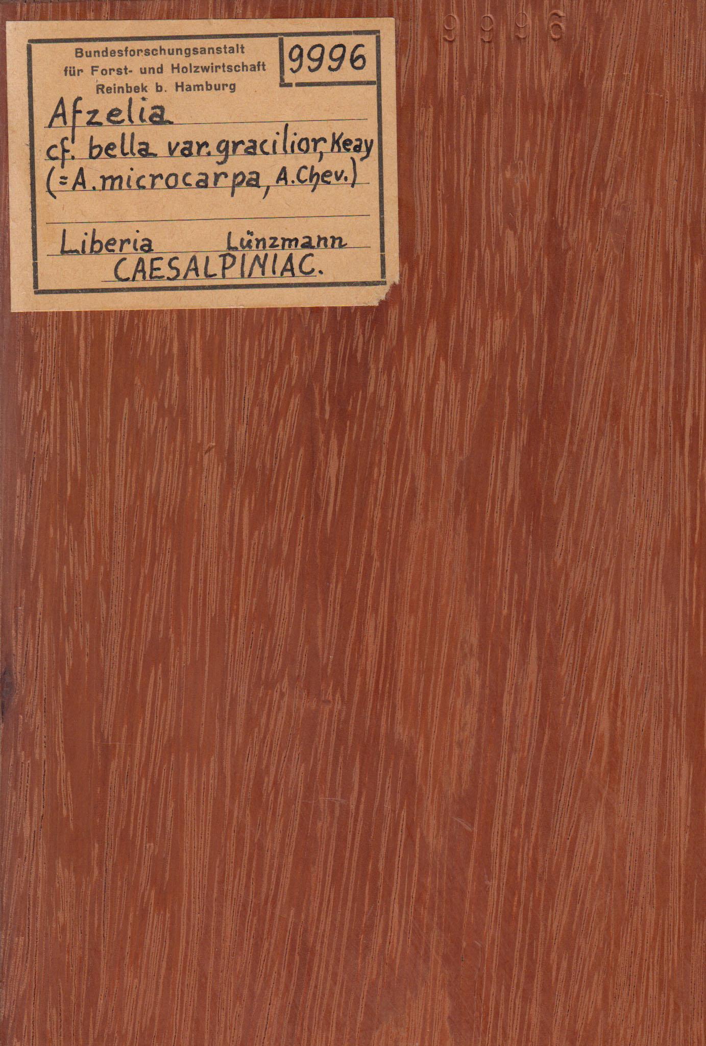 Beliebt Afzelia bipindensis – Wikipedia AF57