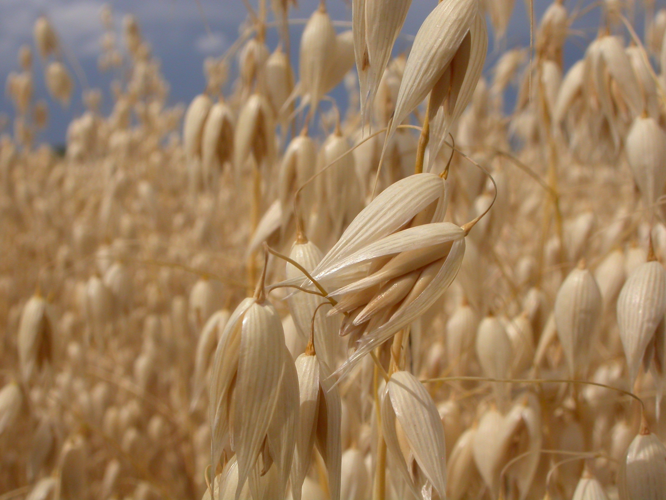 Is Oats A Natural Resource