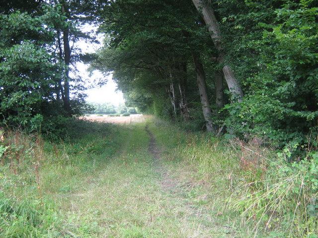 Bridleway past Benacre Wood - geograph.org.uk - 1426423