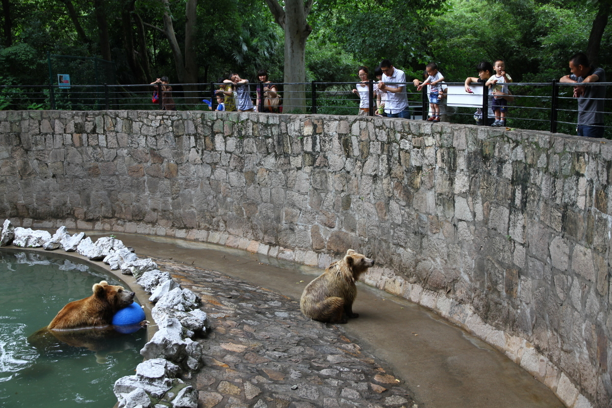File Brown Bear In Shanghai Zoo Jpg Wikimedia Commons