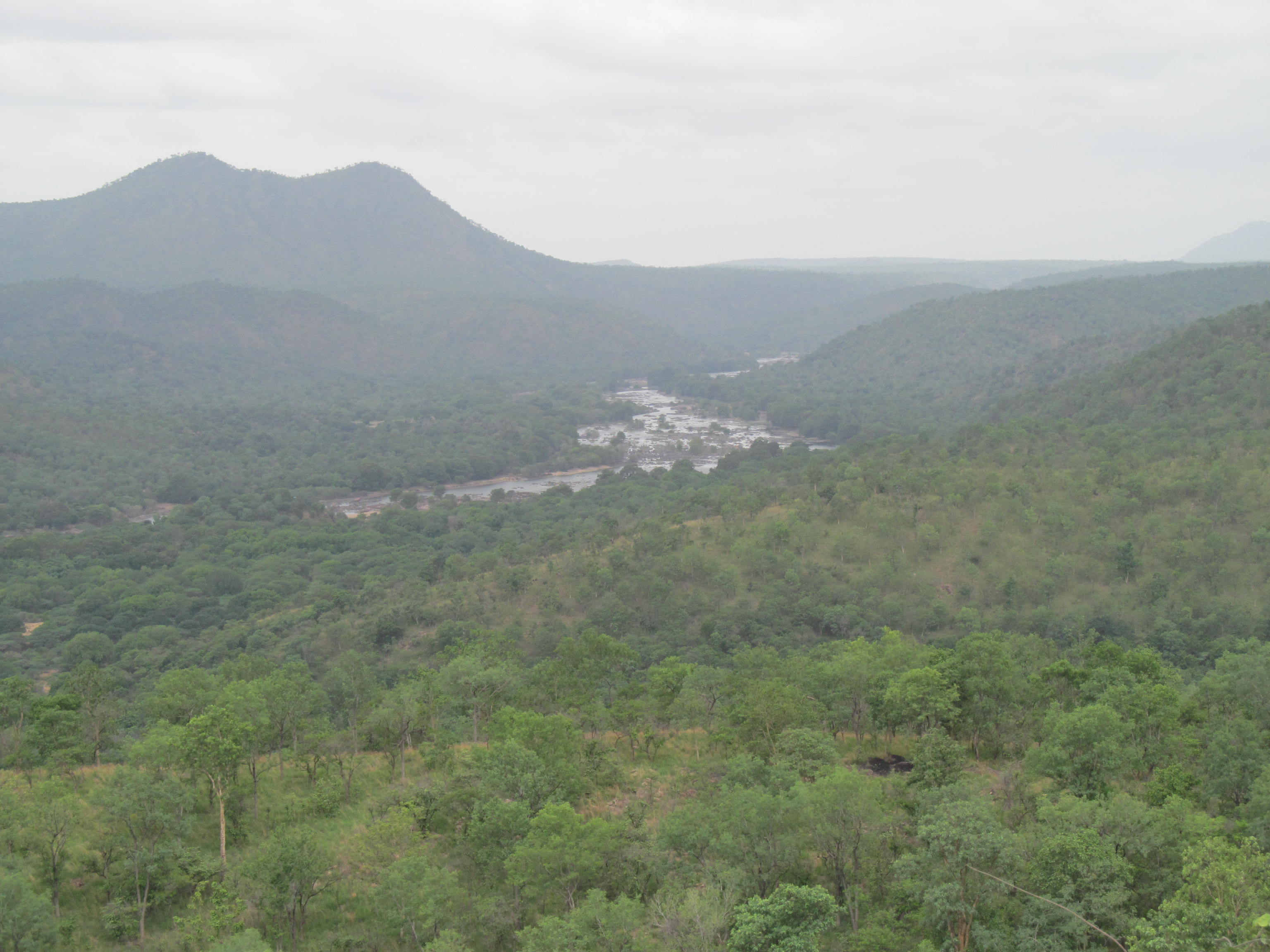 Cauvery Wildlife Sanctuary