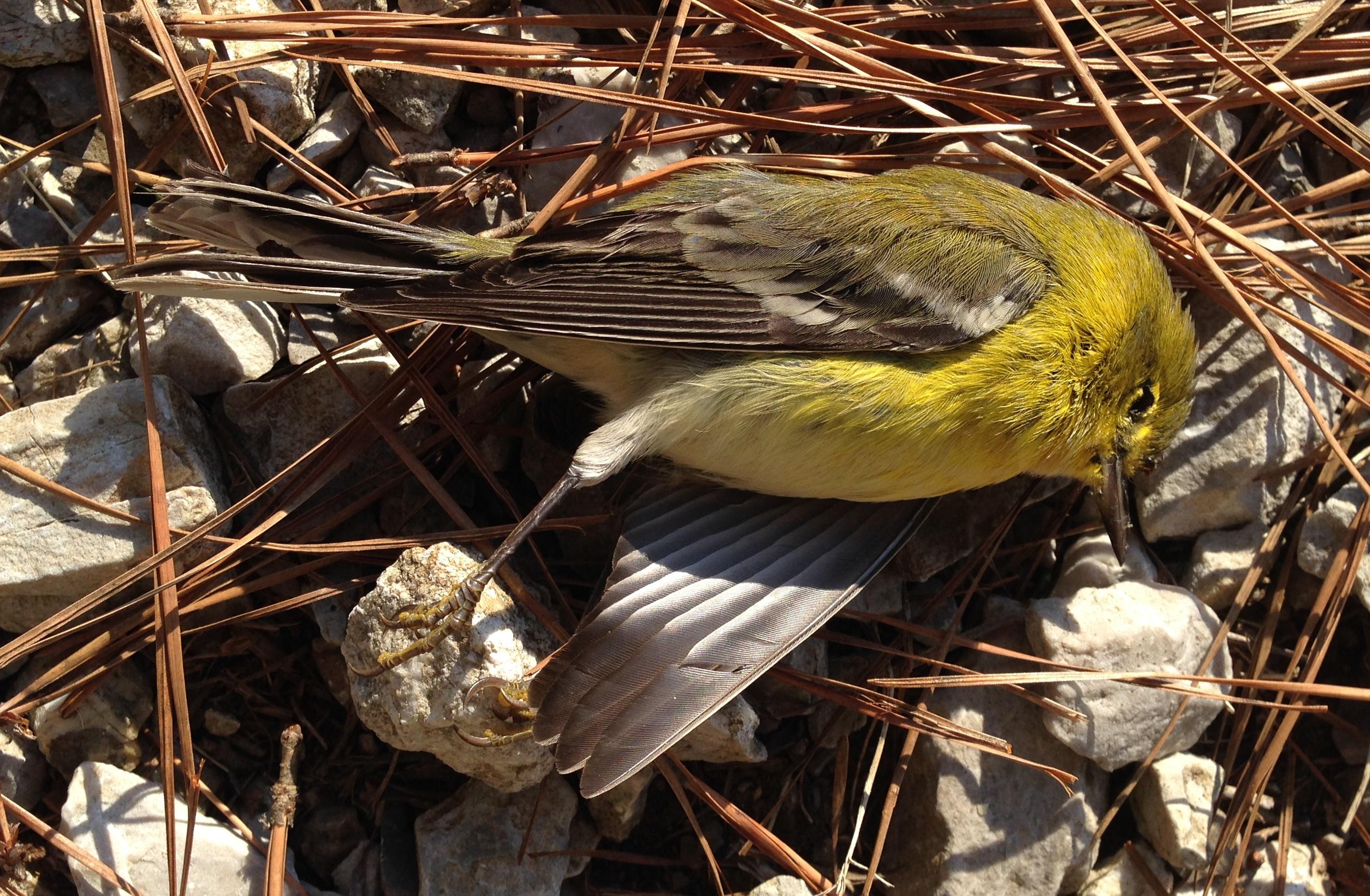 Image result for dead bird
