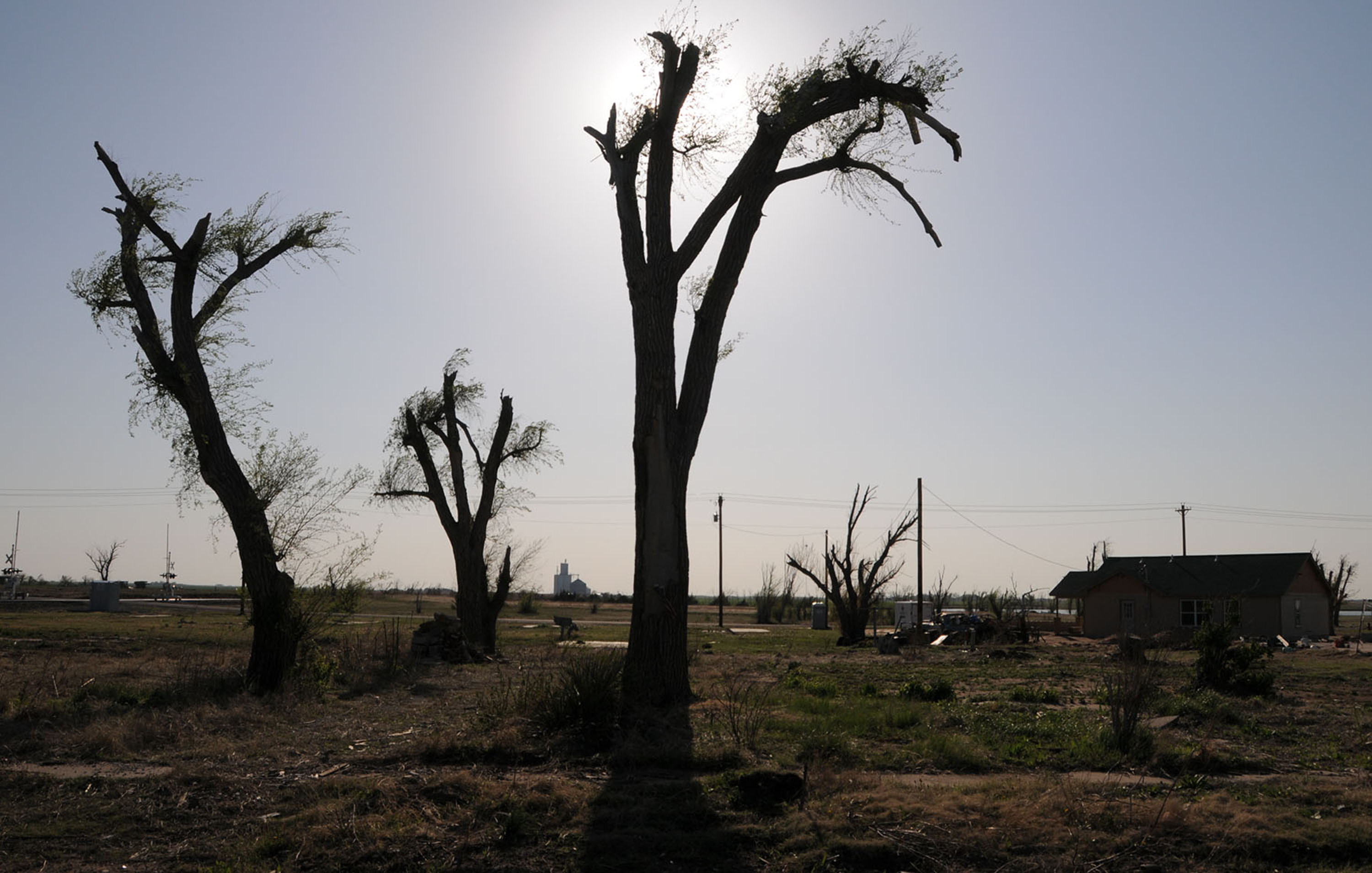 Tree leaves of kansas - File Fema 35044 Trees With New Leaves At A Kansas Tornado Site
