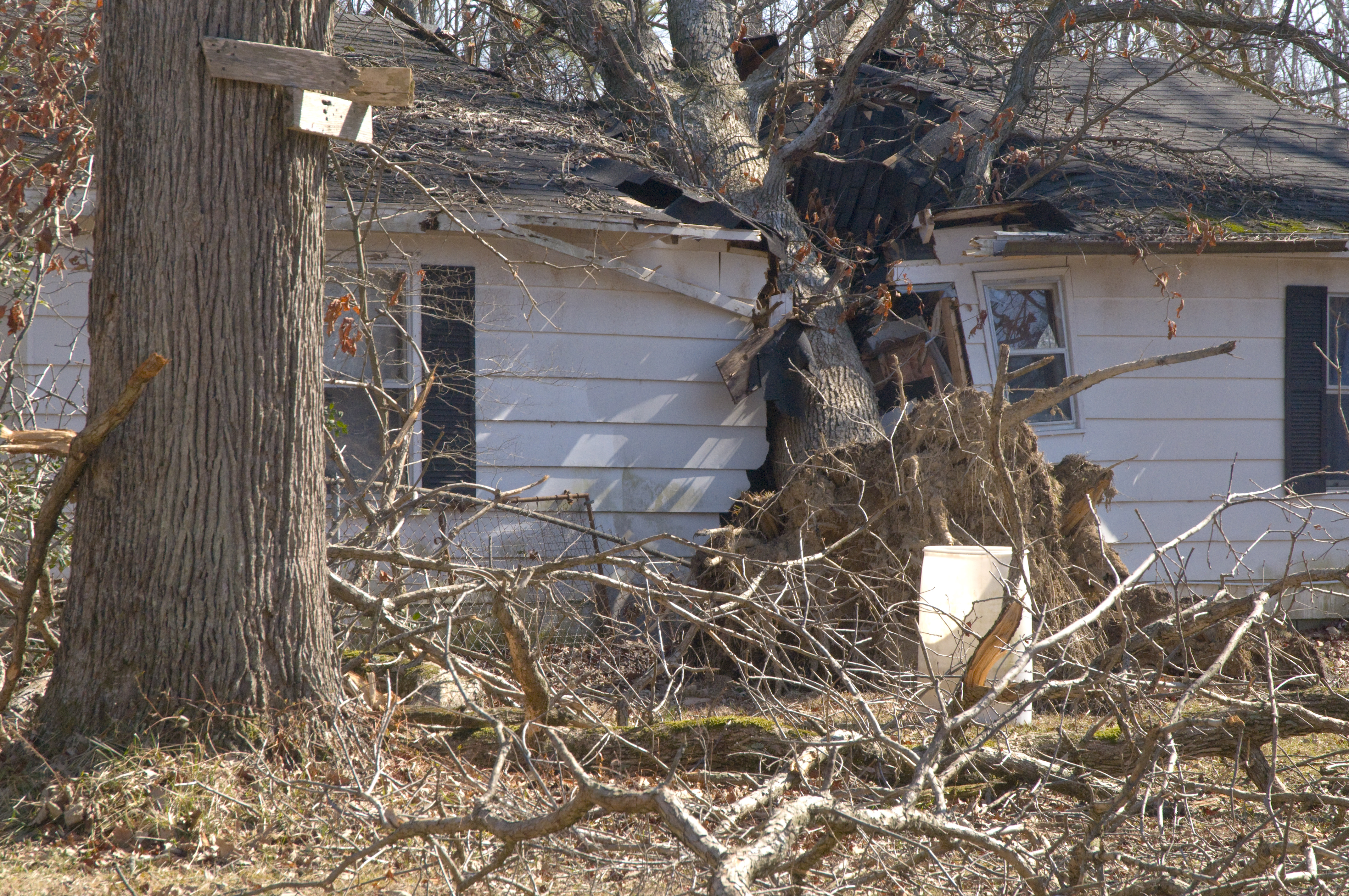 Image result for tree on house