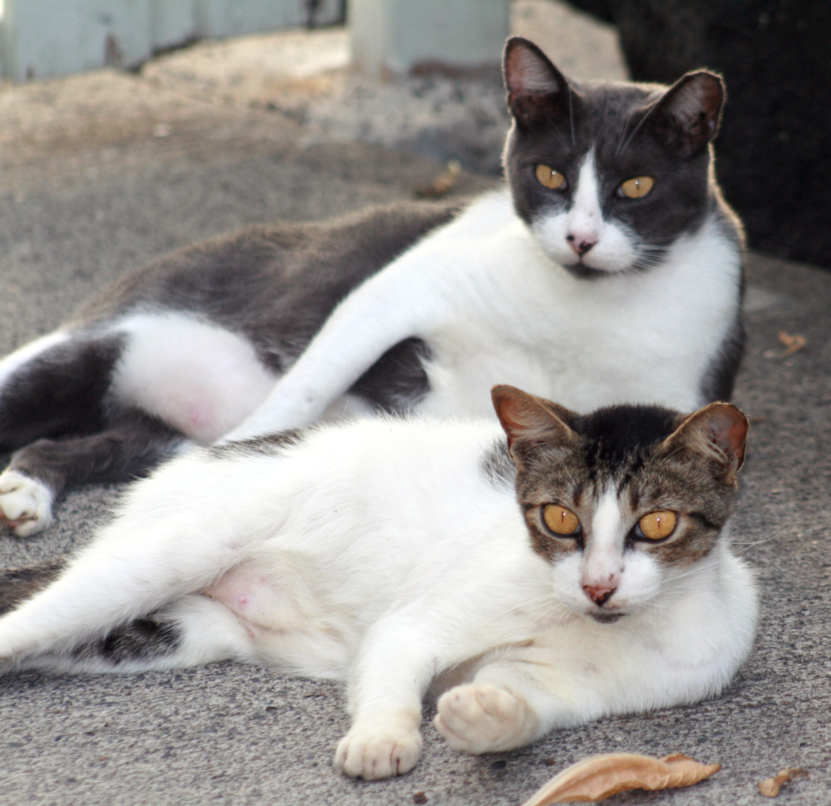 File:Feral cats.JPG - Wikipedia, the free encyclopedia