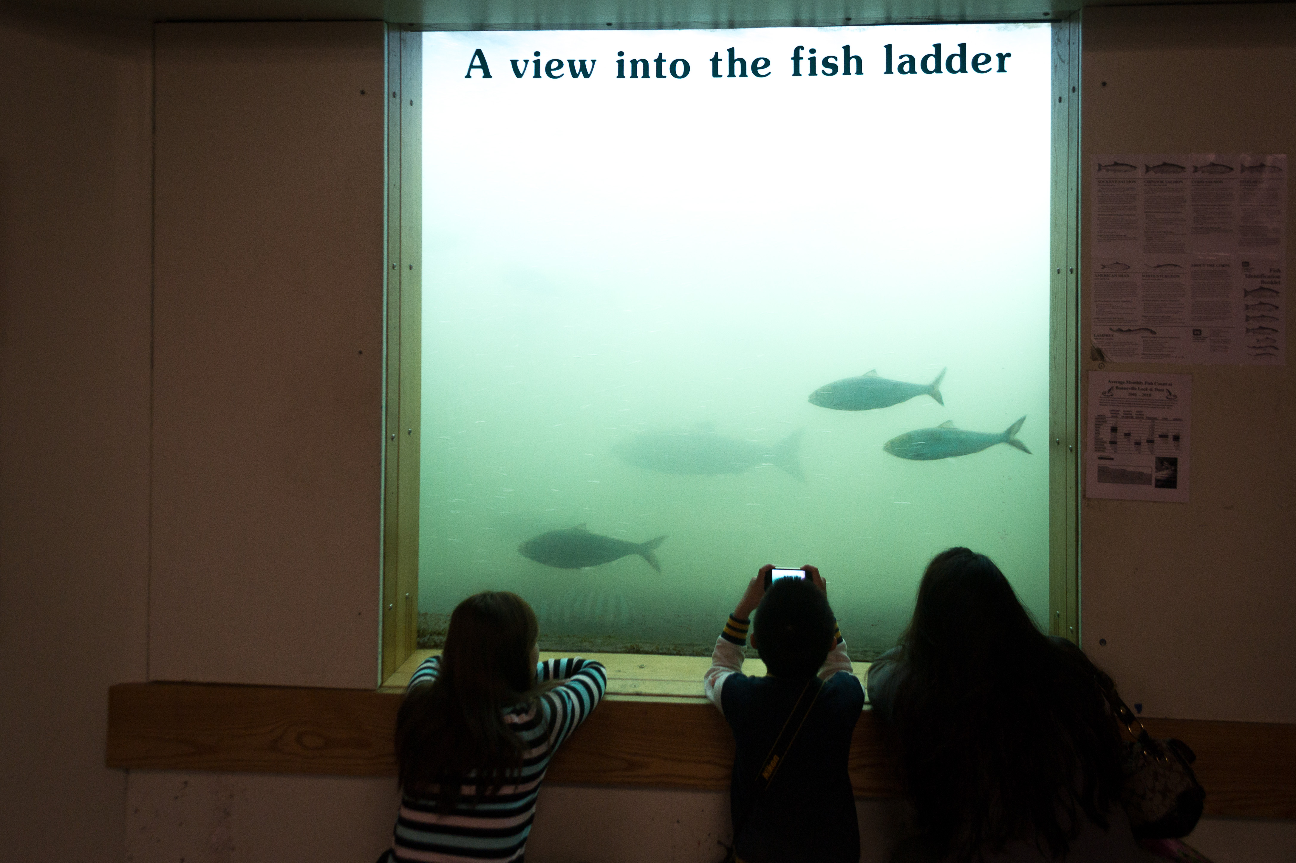 File fish viewing window bonneville wikipedia for Bonneville dam fish camera